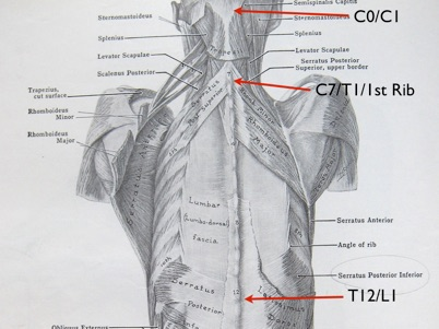 Spinal Anatomy 101